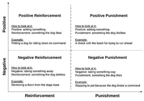 Understanding Dog Training