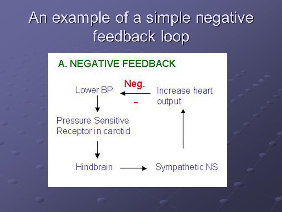 Feedback mechanisms, hormones and the endocrine system - ppt video ...