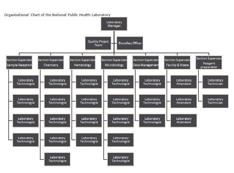 40 Free Organizational Chart Templates (Word, Excel, PowerPoint ...