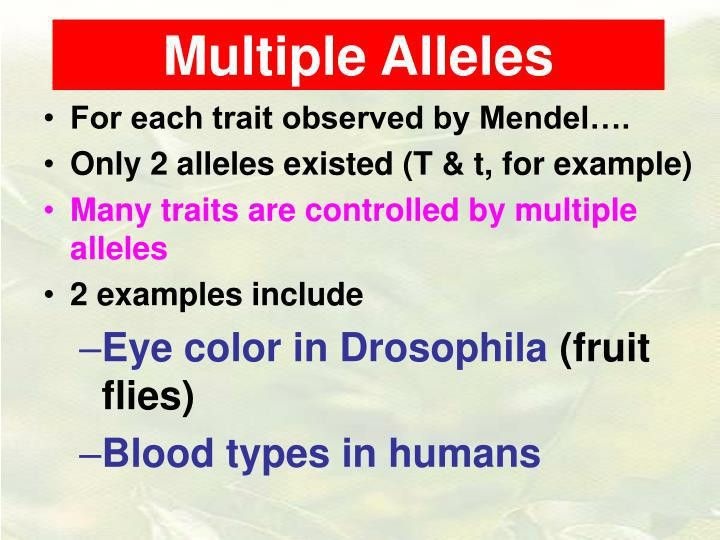 PPT - Multiple Alleles PowerPoint Presentation - ID:5418978