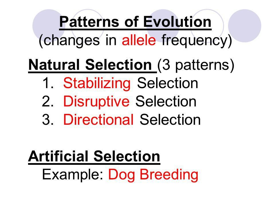 Natural Selection. - ppt download
