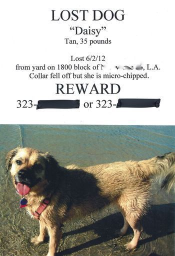 Lost-pet poster: Six tips for a more effective sign   L.A. at Home ...