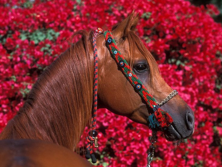 60 best Horses images on Pinterest | Horses, Animals and Beautiful ...