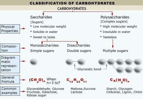 Monosaccharides and Oligosaccharides | Tutorvista.com
