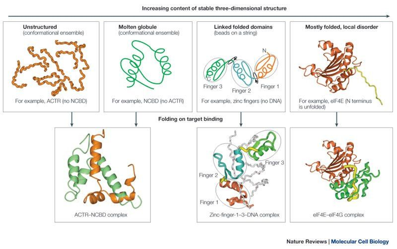 The continuum of protein structure.The upper panels show examples ...