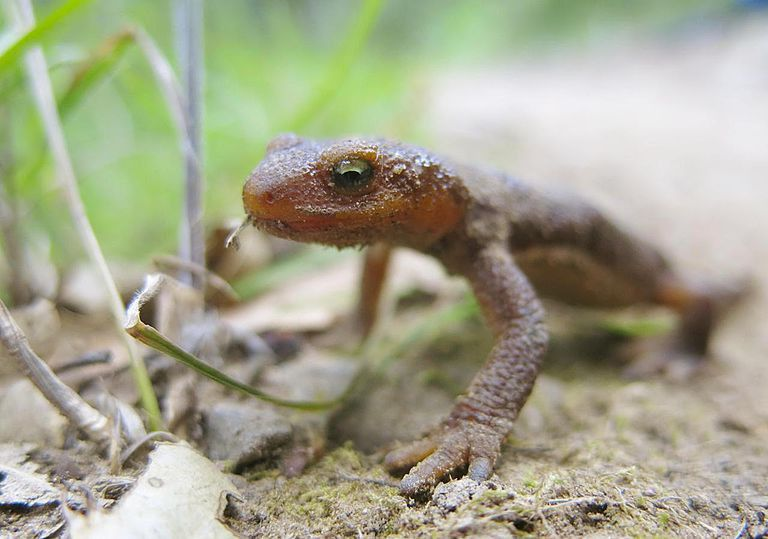 Careers With Animals: Herpetologist