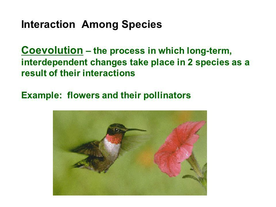 Ch. 17 Biological Communities (pg. 361) How Organisms Interact in ...