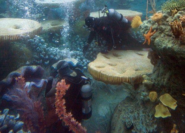 Underwater with Disneyland scuba divers – Orange County Register