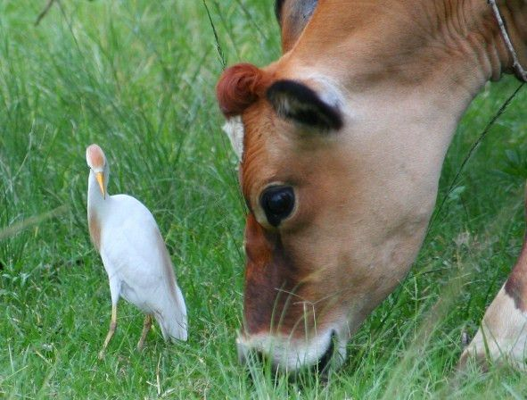 Examples of Commensalism for a Better Understanding of the Concept