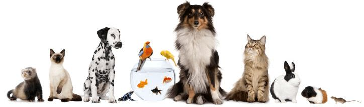 Job: Manchester Animal Shelter hiring p/t Pet Adoption Counselor ...