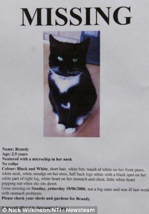 Cat owner's nine-month legal battle costing £1,000 to get back pet ...