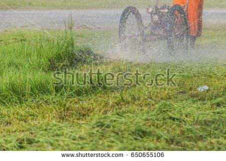 Overgrown Lawn Stock Images, Royalty-Free Images & Vectors ...