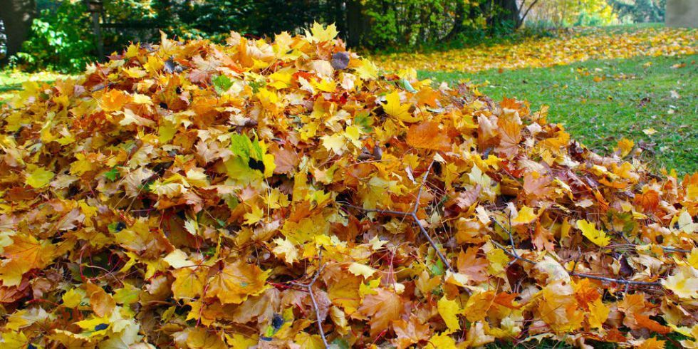 Fall Lawn Care: 6 Steps to Take Right Now