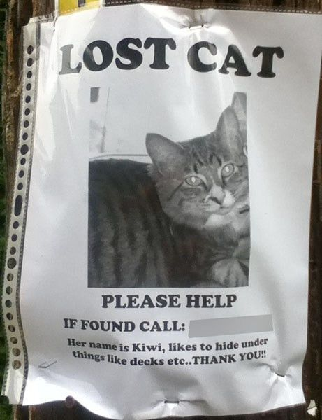 So Many Lost Cat Posters I Have Lost Count | The Blog of Otis