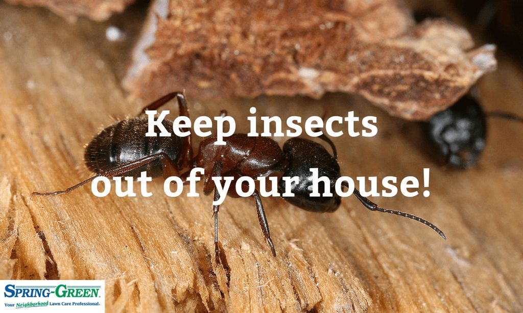 Perimeter Pest Control: Keeping Insects Out Of Your House