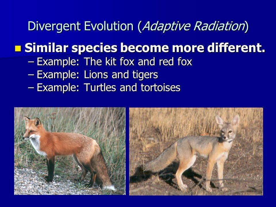 Evolution in Action Chapter 15 Section 3. Convergent Evolution ...