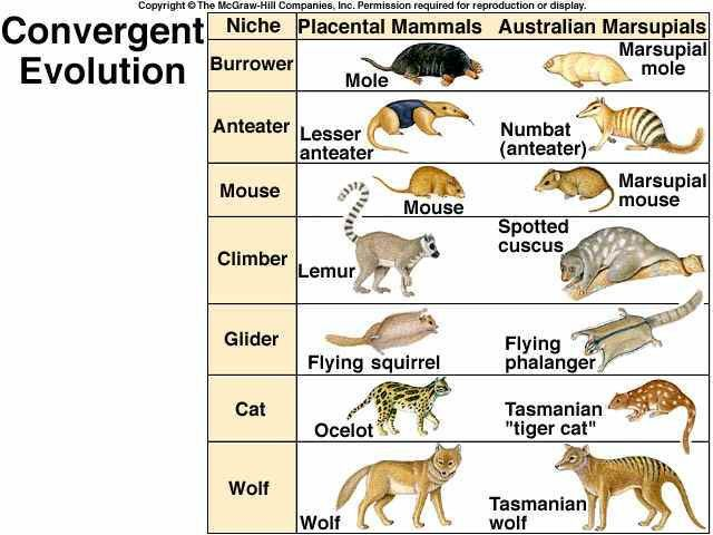 Post random examples of convergent evolution
