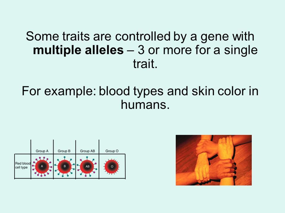 Human Heredity. There are traits that are controlled by one gene ...