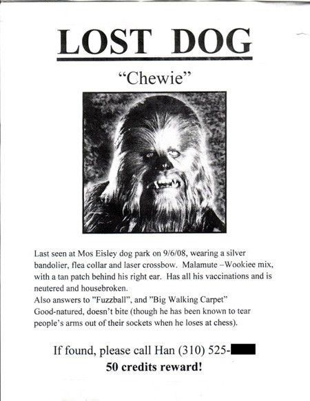 The 10 Most Awesome Lost-Pet Flyers | Order 5,000 Flyers Today