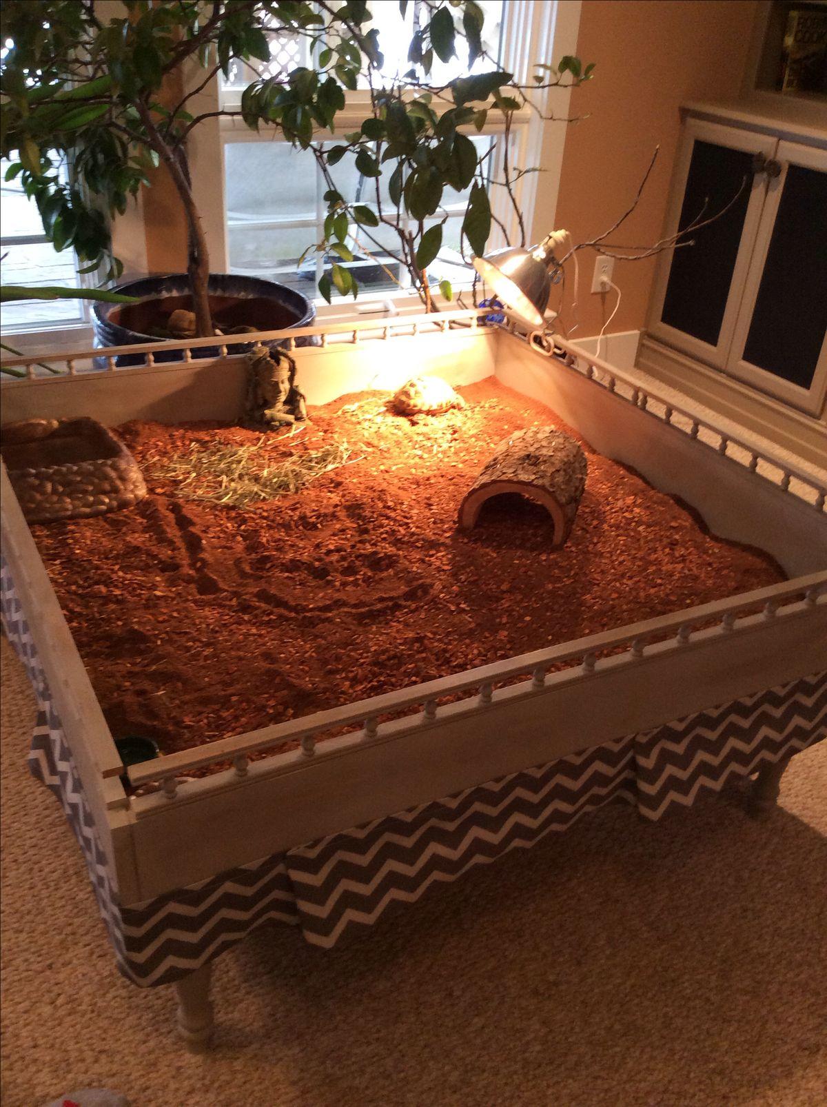 1000 images about tortoise habitats on pinterest for Tortoise table org uk