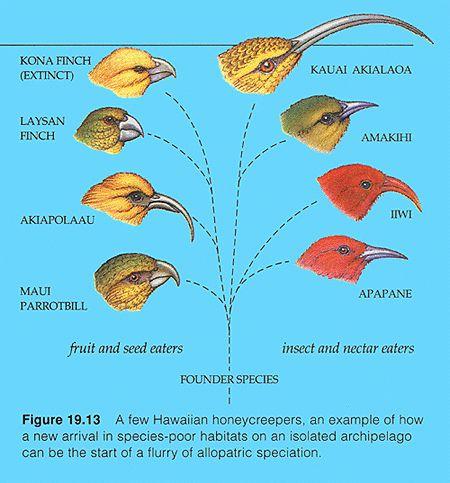 BIO 304. Ecology & Evolution: Macroevolution