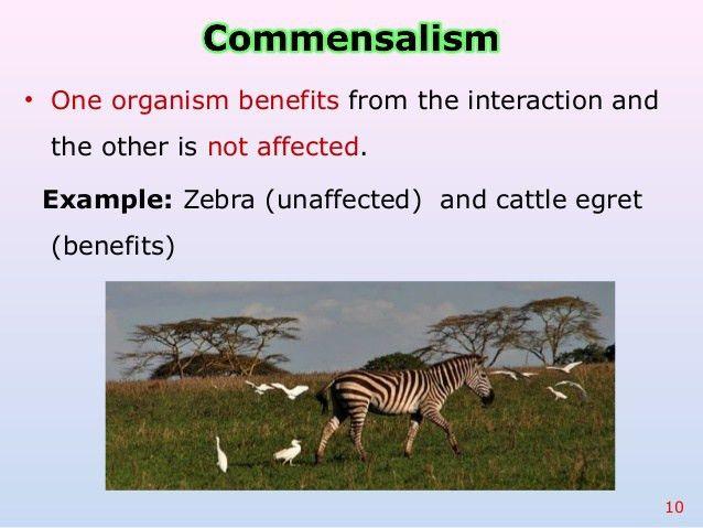 Plant parasite coevolution