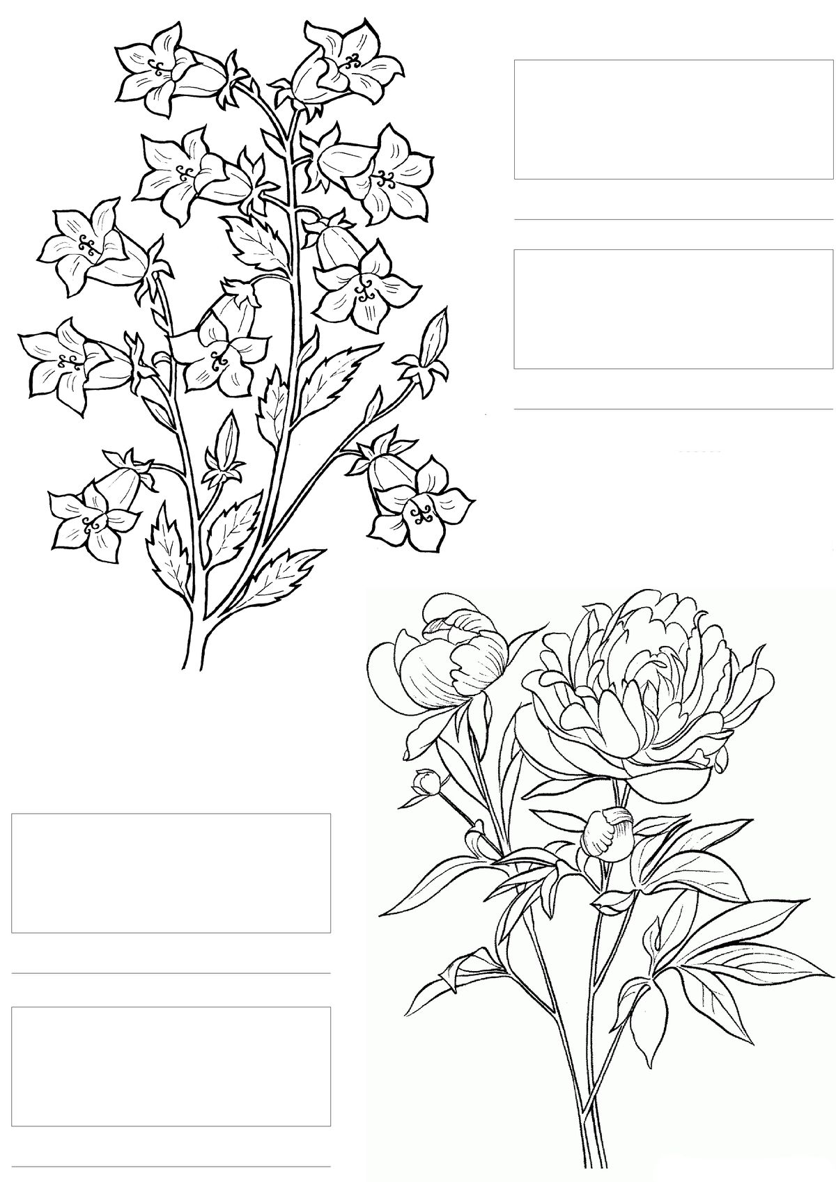 Spectrum Noir Blank Color Chart Printable Sketch Coloring Page