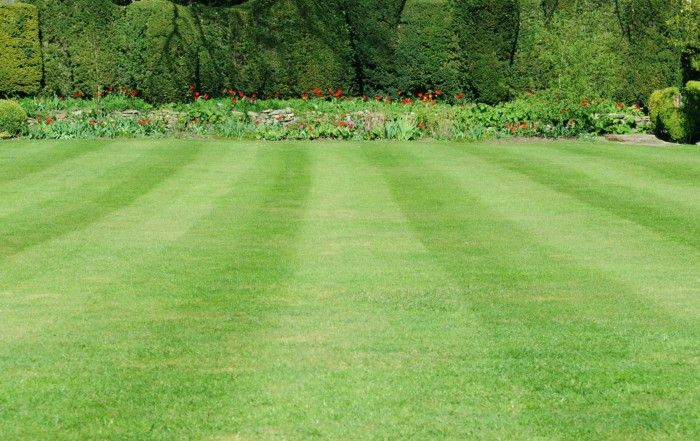 Lawn Care Eagan | Lawn mowing and maintenance in Eagan MN