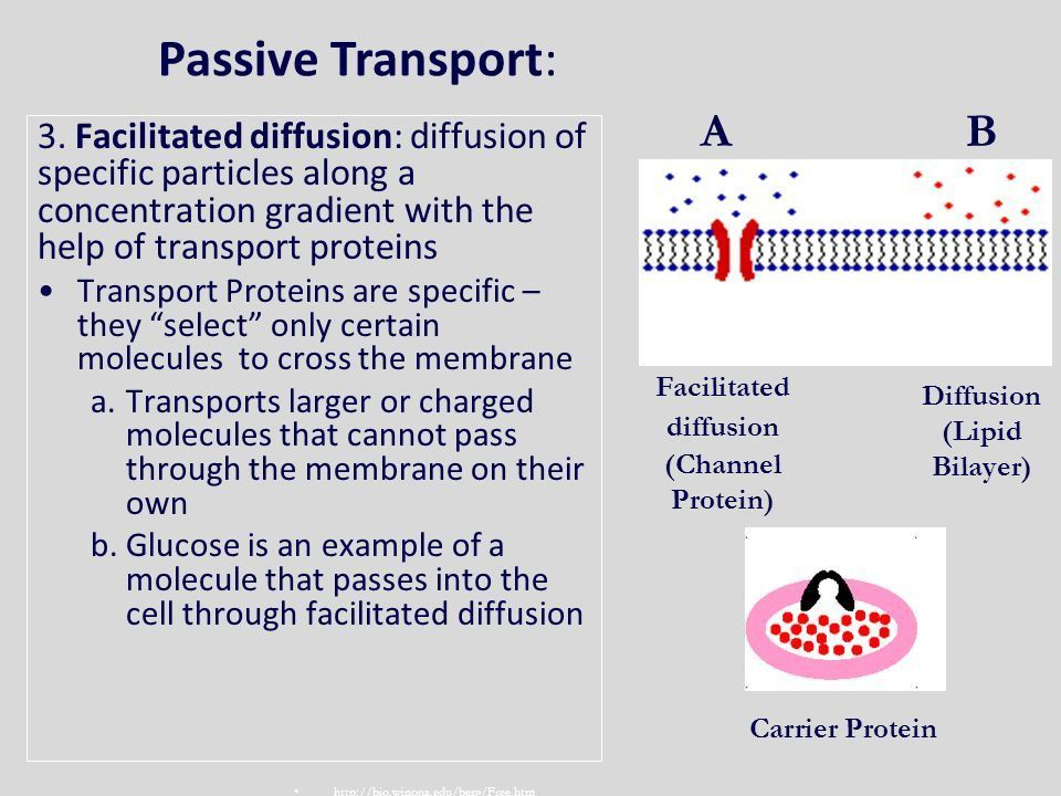 Unit 5- Cell Membrane & Cell Transport - ppt video online download