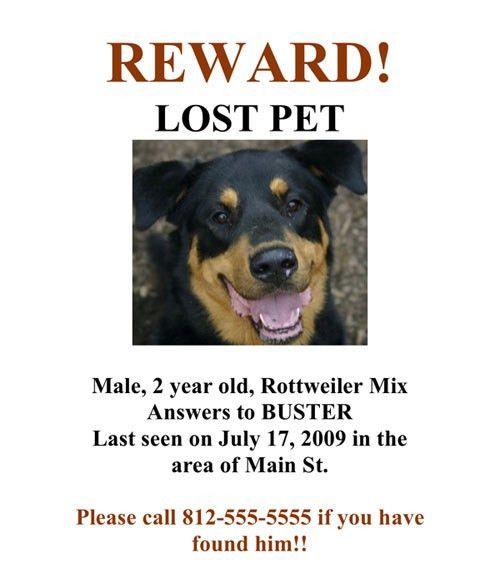 9 Best Images of Lost Dog Poster - Lost Missing Dog, Lost Dog ...
