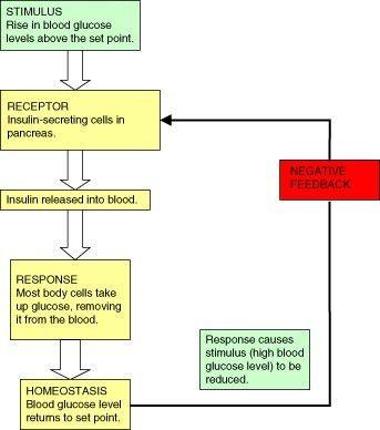 Homeostasis and Regulation | CK-12 Foundation