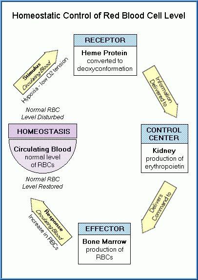 FREE Toxicology Course on Homeostasis, Toxicity & Neurotoxicity