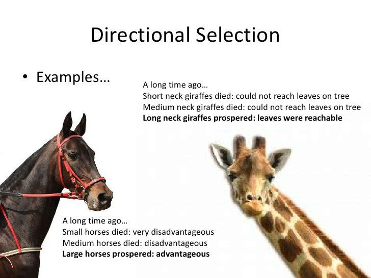 Types of selection