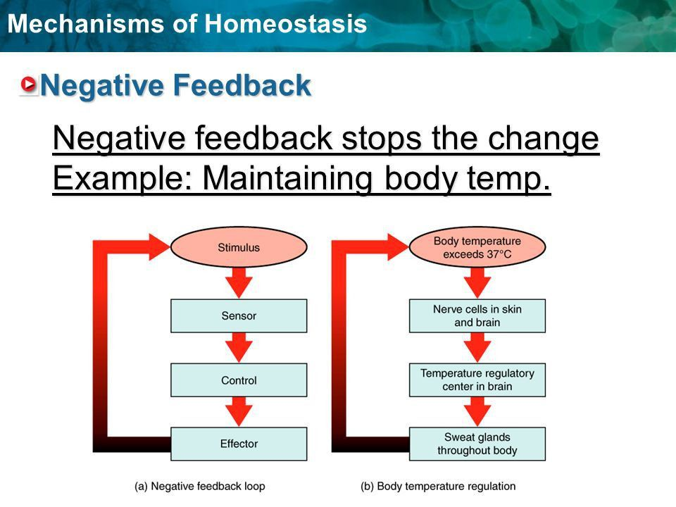 Balancing Act- Mechanism of Homeostasis - ppt video online download