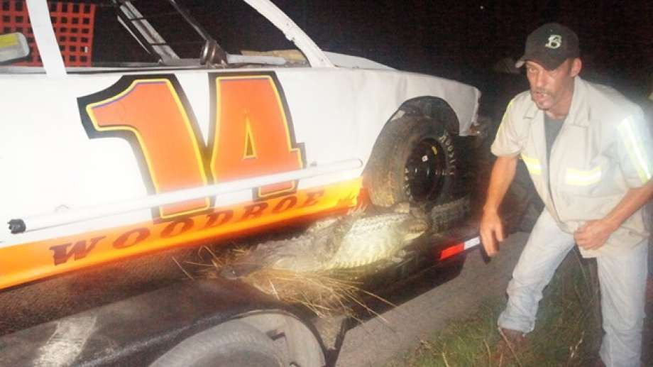 New Caney tow truck driver wrestles 8-foot gator blocking traffic ...
