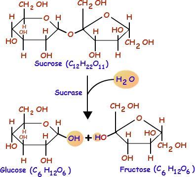 Cell Metabolism | Types of Cell Metabolism | Biology@TutorVista.com