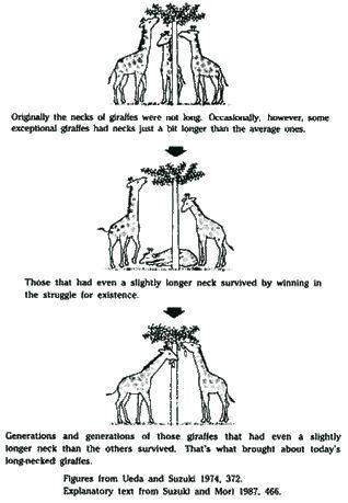 Turn up for ap biology - Evolution