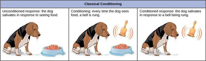Learned Animal Behavior | Boundless Biology