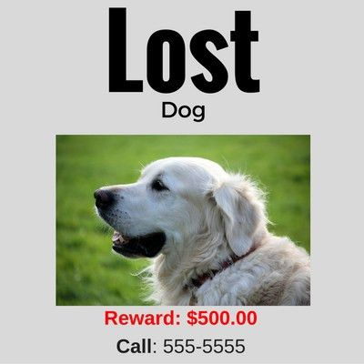 What To Do If Your Dog Goes Missing - Caring for a Senior Dog
