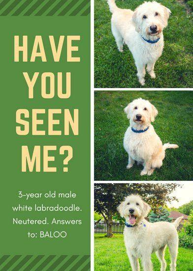 Lost Pet Flyer Template Free [Template.billybullock.us ]