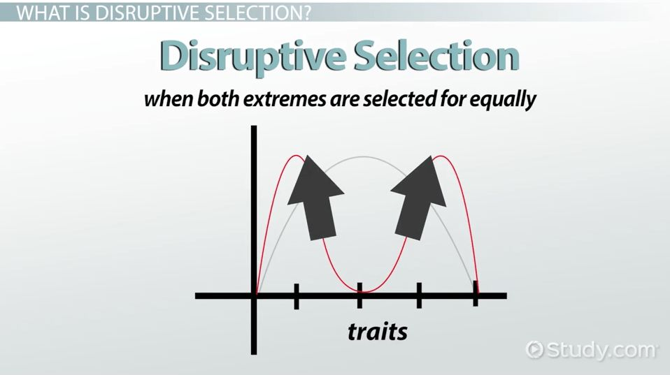 Disruptive Selection: Example, Definition & Graph - Video & Lesson ...