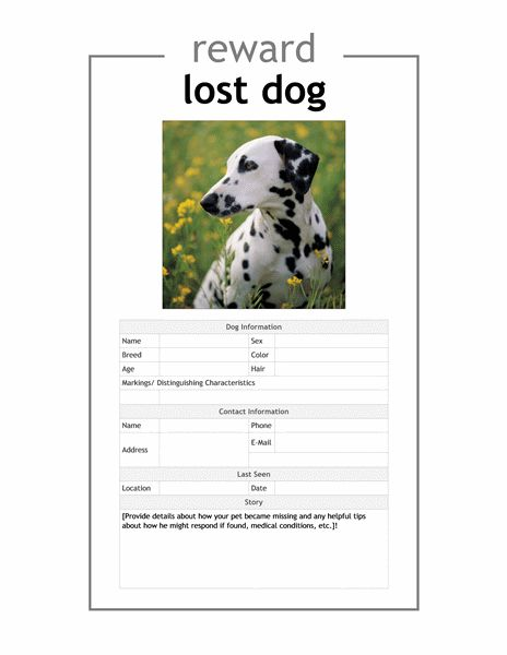 Lost pet flyer - Office Templates