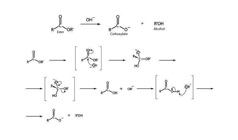 Organic Mechanisms with Biochem Examples