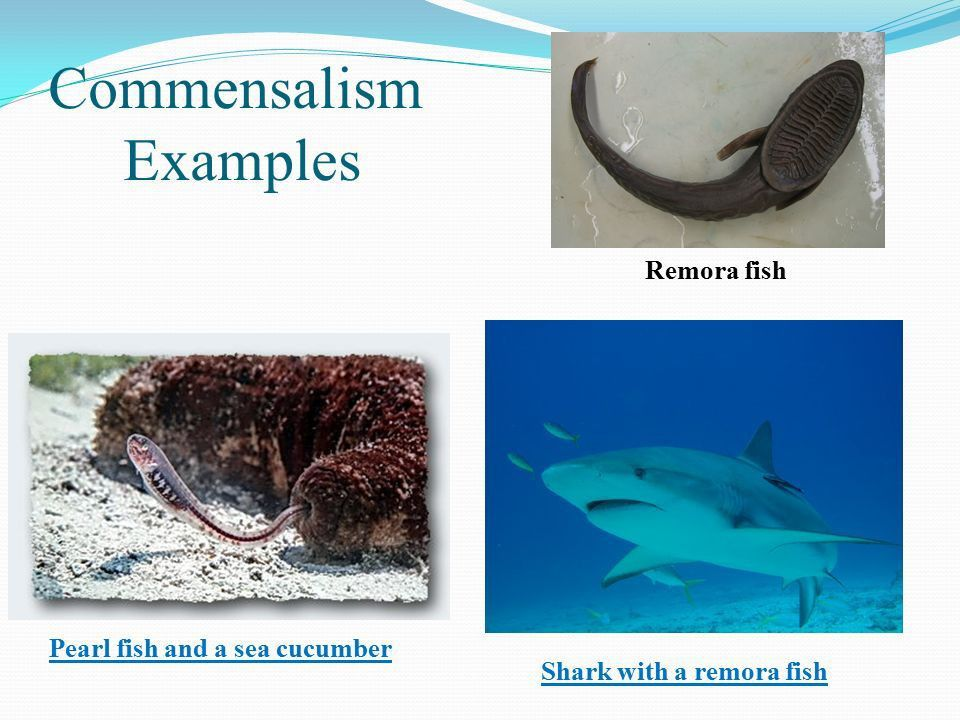 Marine Bio- Day 5&6 Drill: What are some abiotic and biotic ...