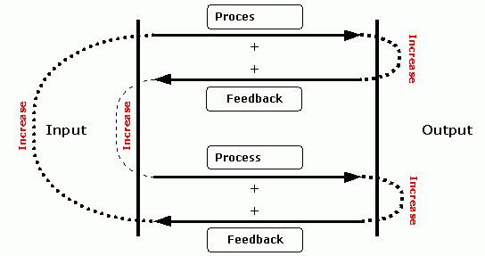 Feedback - a key concept in Economics and Management