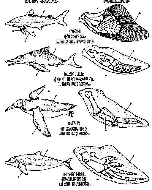 Best 25+ Convergent evolution ideas on Pinterest | Prehistoric ...