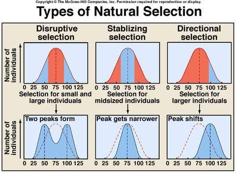 24.2 Natural Selection Quiz - ProProfs Quiz