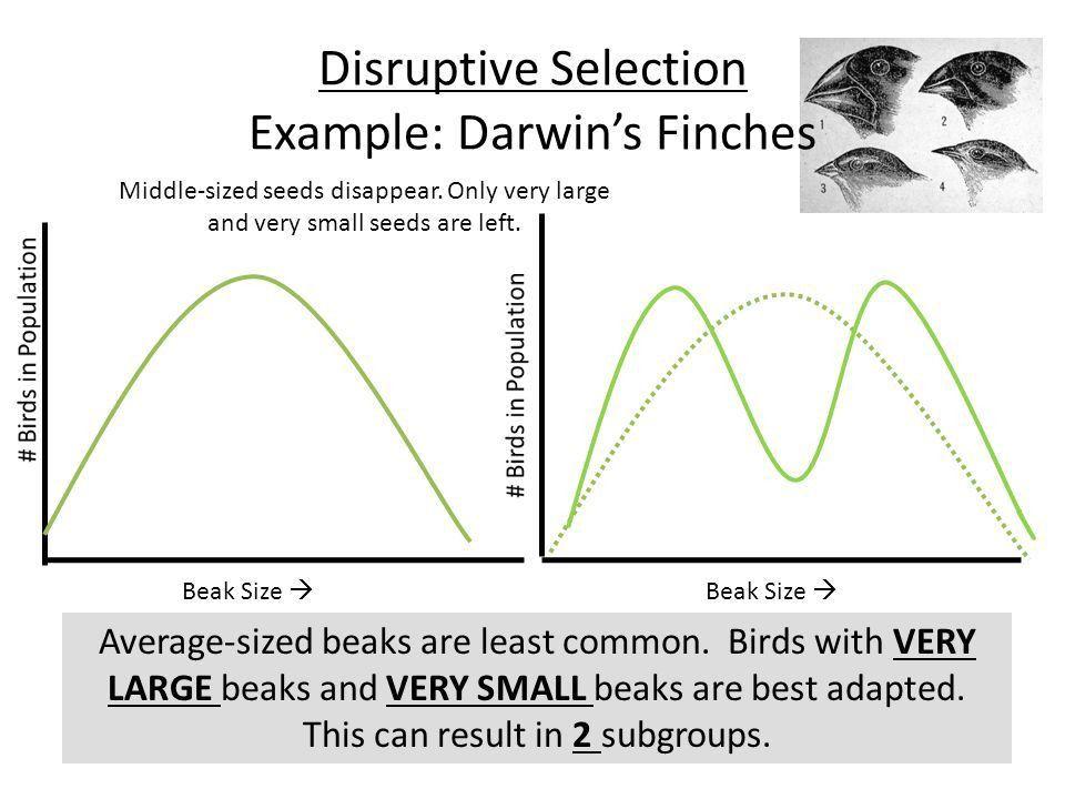 Evolution as Genetic Change - ppt video online download