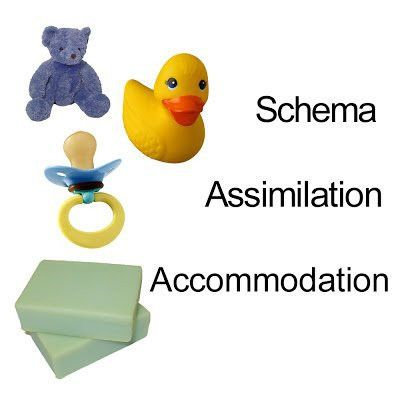 What is the Difference Between Assimilation and Accommodation?