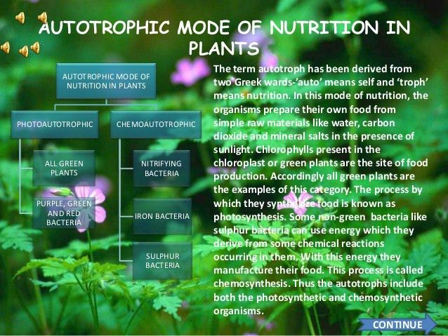 Types of nutrition